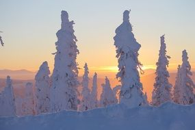 frosted trees at gorgeous winter sunset, usa, alaska
