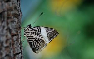 patterned butterfly in wildlife