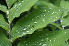 Fresh raindrops on the green leaves