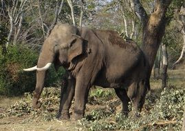elephant in national park in india
