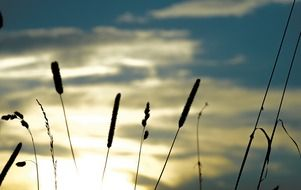 picture of the grasses at the sunrise