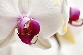 delicate orchid flower