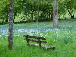 bench in the meadow