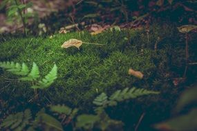 Green moss forest floor leaves ferns