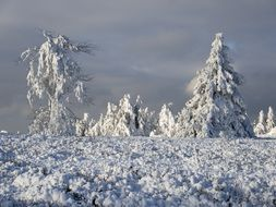 trees in the snow on a hill in winter