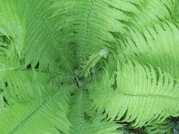 fern plants in nature