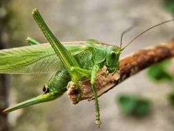 grasshopper on a tree