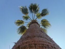 green palm leaves under the blue sky