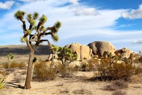 Landscape of the joshua tree national park