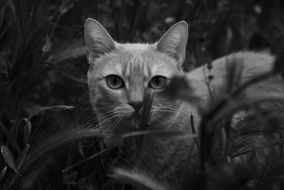 black and white photo of a kitten in the grass