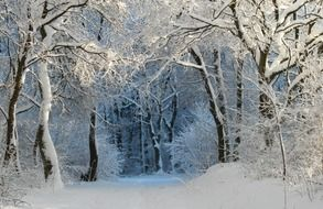Snow-covered magical forest
