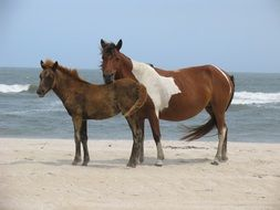 Two wild horses on the beach ocean