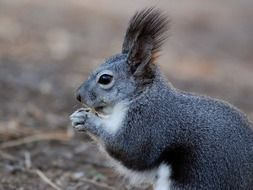 amazing squirrel animal