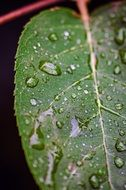 water drops on a green leaf closeup