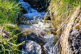 impetuous stream wild nature
