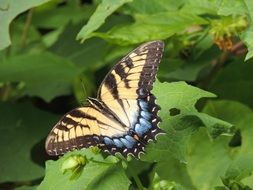 beautiful striped butterfly on a green plant