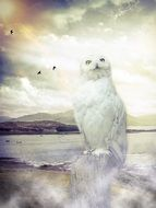 mystical image of barn owl on the lake