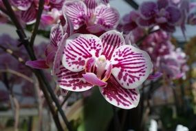 violet white orchid flowers