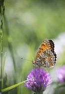 Butterfly on a purple flower in summer