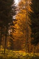 golden autumn forest in the sunlight