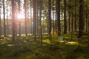 a tender sunbeam through the forest trees