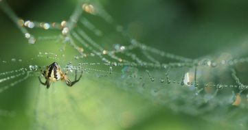 spider is crawling on a wet web