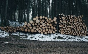 pile of logs in forest at winter