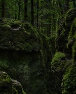moss rocks in the forest
