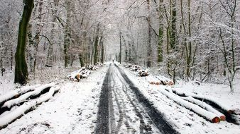 Snow lane in winter forest