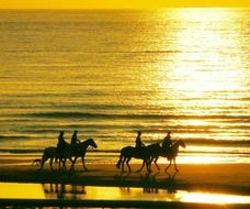 People riding horses on the beach during sunset