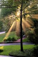 picture of the sunrays at the park