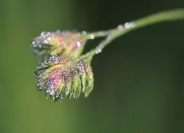 dewdrop drop on a multicolored flower
