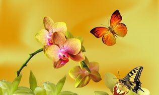 butterfly near yellow orchid drawing