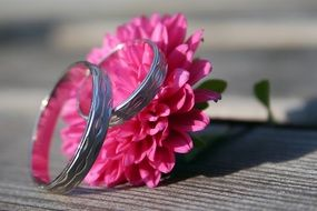 wedding rings on a bright pink flower