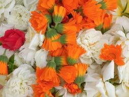 orange calendula, white roses and red carnation