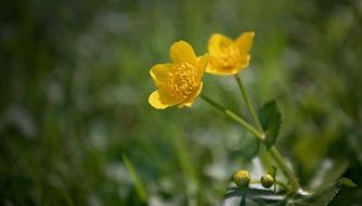 Yellow flower-weed