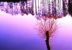 reflection of trees in water pond