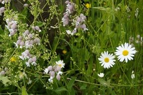 mixed wild flowers on a meadow