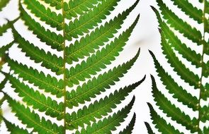 Green fern leaves on a light background