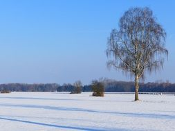 lonely tree in a white winter field