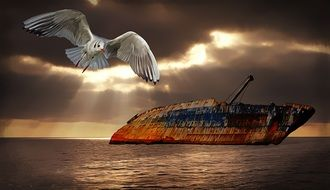 Seagull and rusty ship drawing