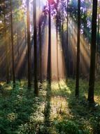 the sun\'s rays make their way through the trees in the forest