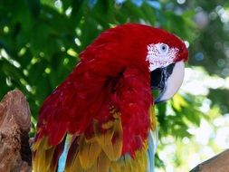 A parrot with red feathers