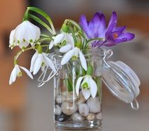 bouquet of snowdrops and crocuses
