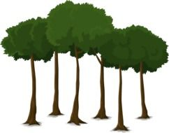 Drawing of trees with long thin trunks