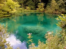 clear water in forest lake, croatia, plitvice