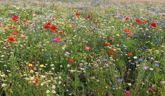 Beautiful colorful wild flowers in summer