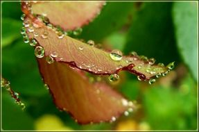 Drops of water on the colorful leaves
