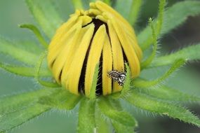 spider on a yellow flower daisy