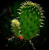 green cactus with sharp spikes in the bright sun close up